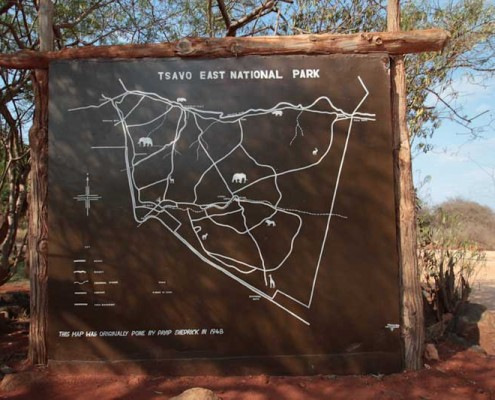 Kite-Safari