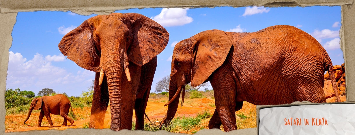 1Safari-KeniaEN