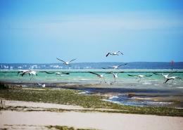 An der Küste in Suedafrika bei Langebaan könnt ihr Flamingos beobachten.