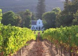 Erkundet ein Weingut, wenn ihr in Suedafrika in Langebaan seid.