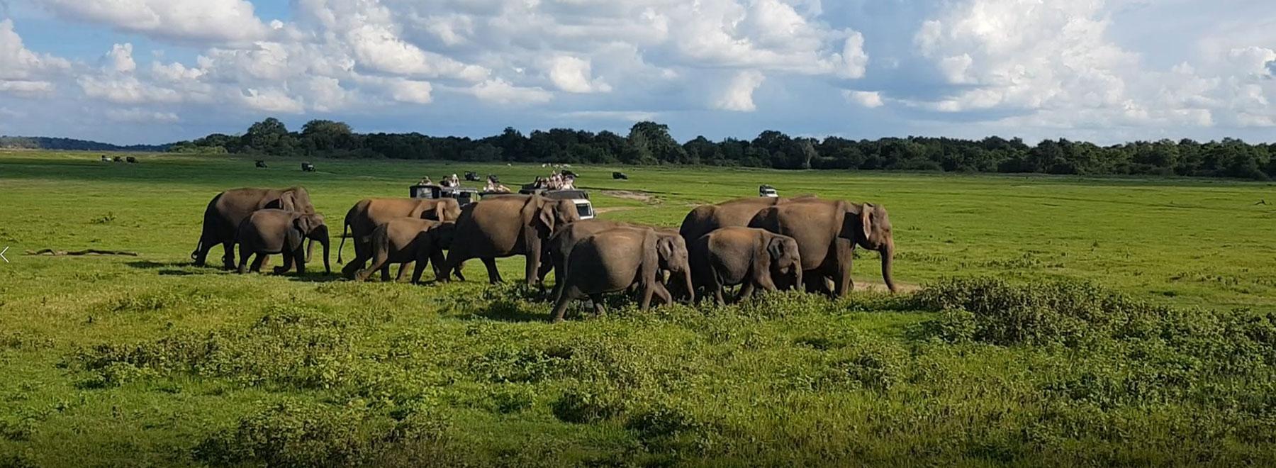 Kitereisen_SriLanka_Kalpitiya