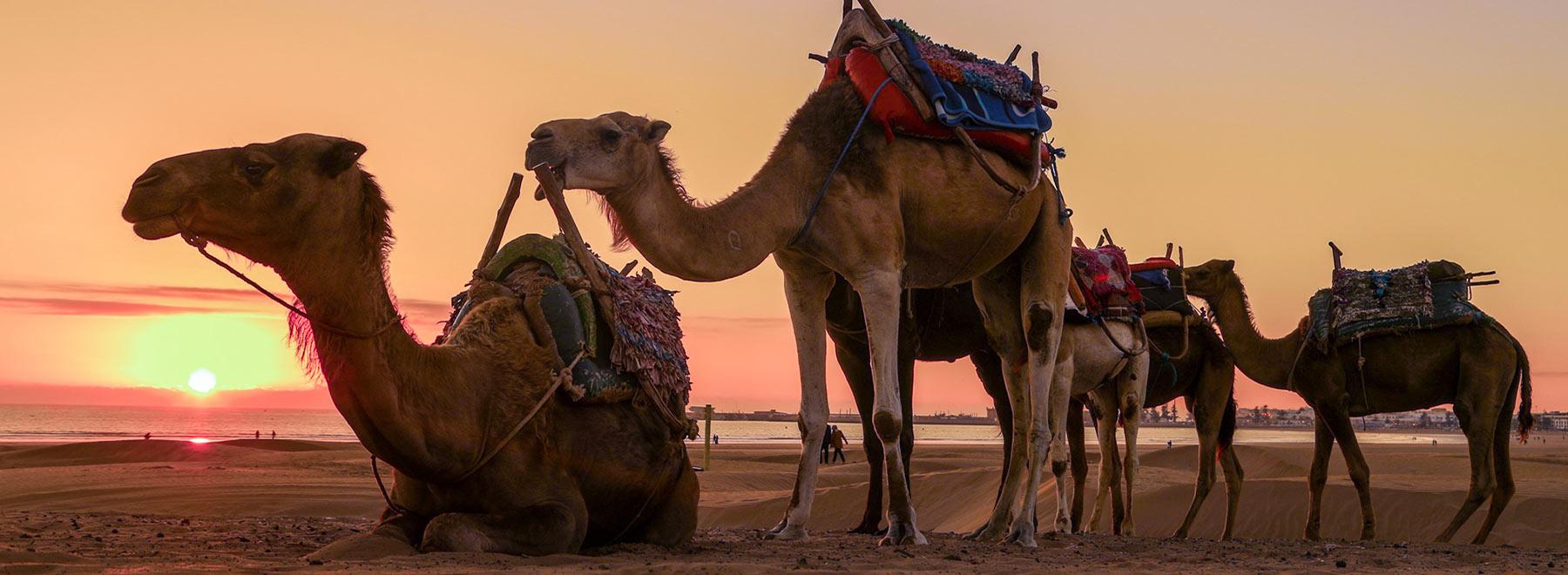 Kiteurlaub-Essaouira